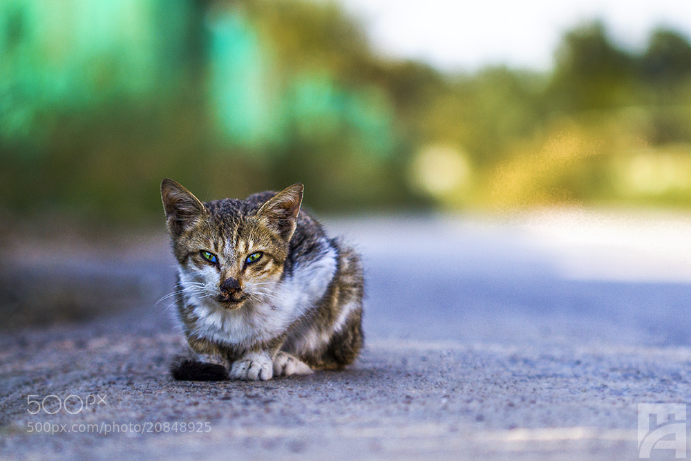 Photograph The angry cat  by Mustafa  Alshafai  on 500px