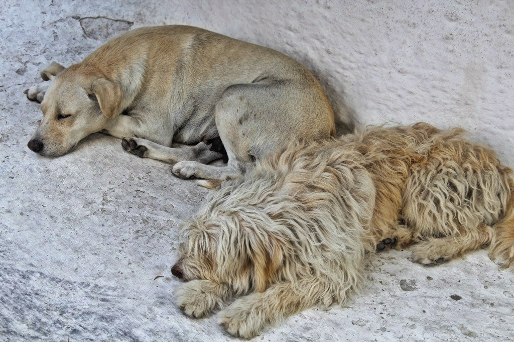 Photograph Dog tired  by Diane  Lee on 500px