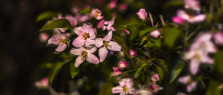Bitter Blossoms, Sweet Night by Jeff Carter on 500px.com