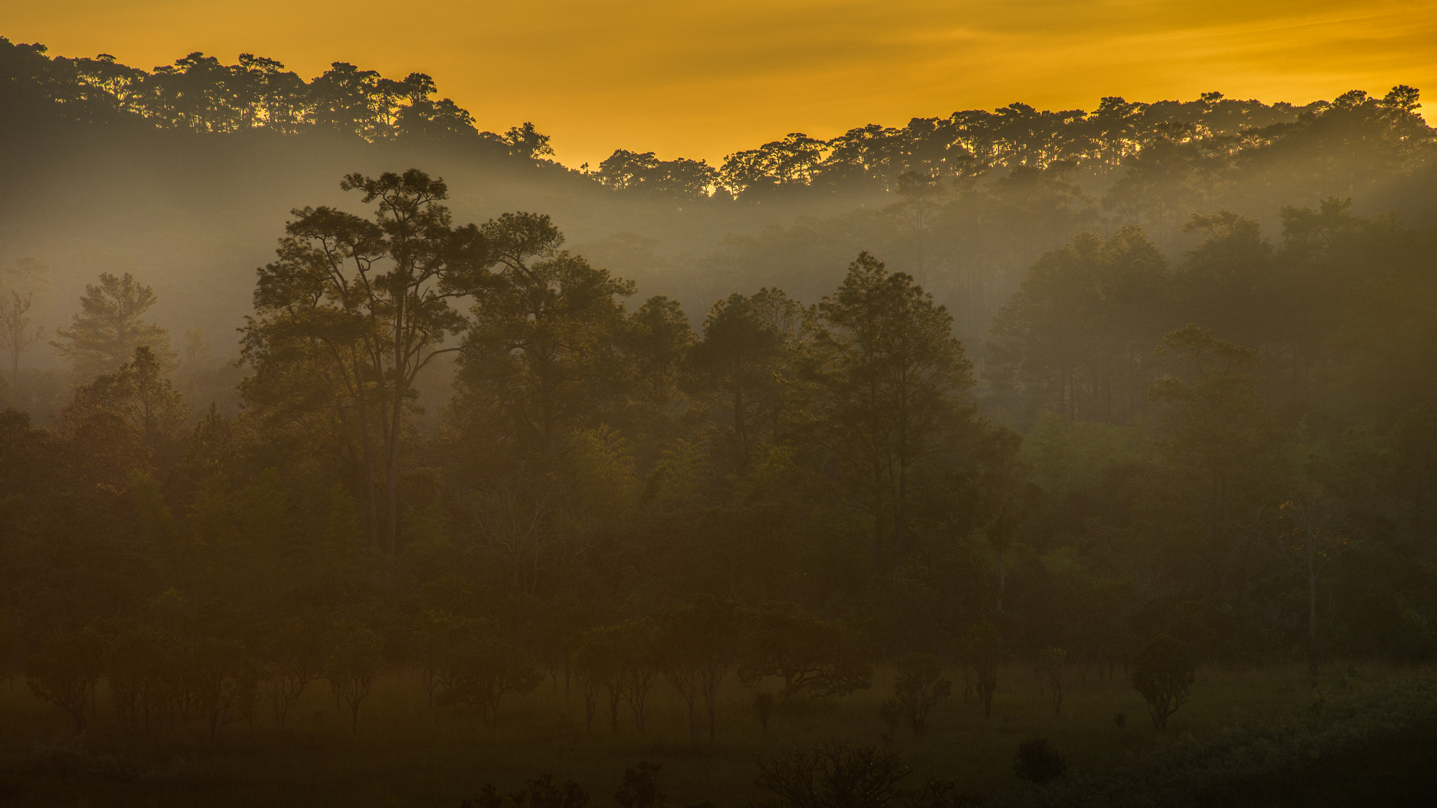 Photograph Sunset in the forrest by Natapong P. on 500px