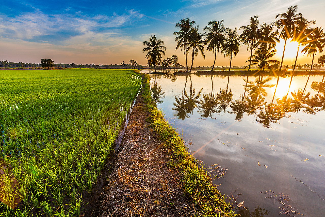 Photograph Rice Field by Marcel Baumgartner on 500px