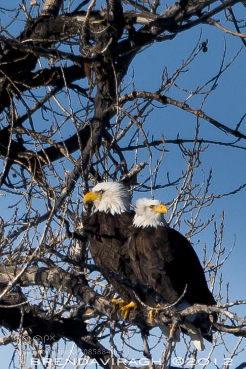 Photograph a pair by Brenda Viragh on 500px