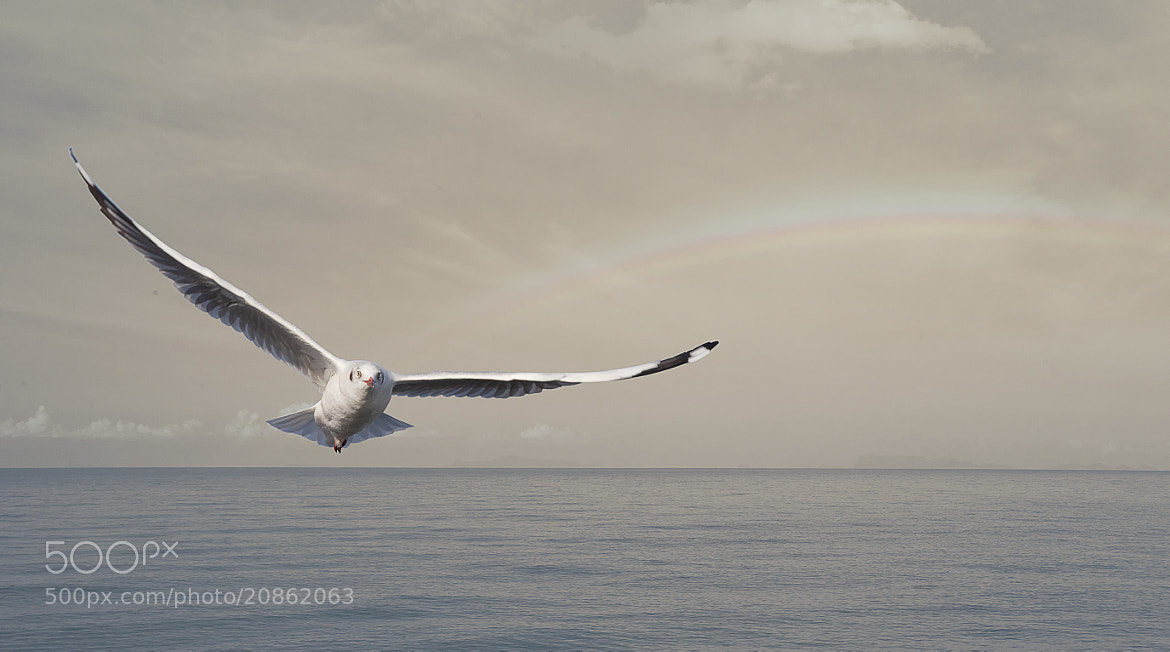 Photograph A seagull by Anek S on 500px