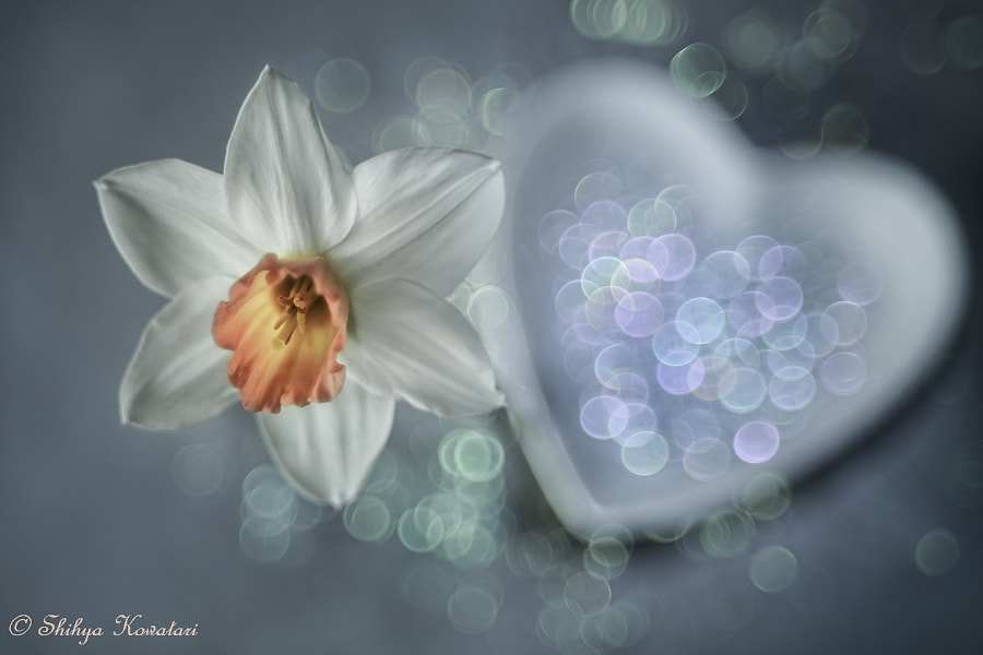 White Spring by Shihya Kowatari on 500px.com