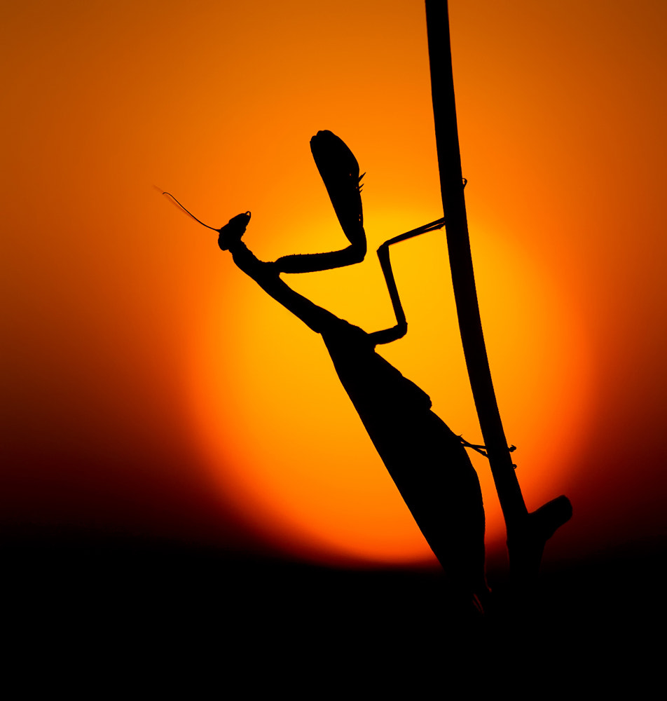 Photograph Sunset Silhouette by Heinz Maier on 500px
