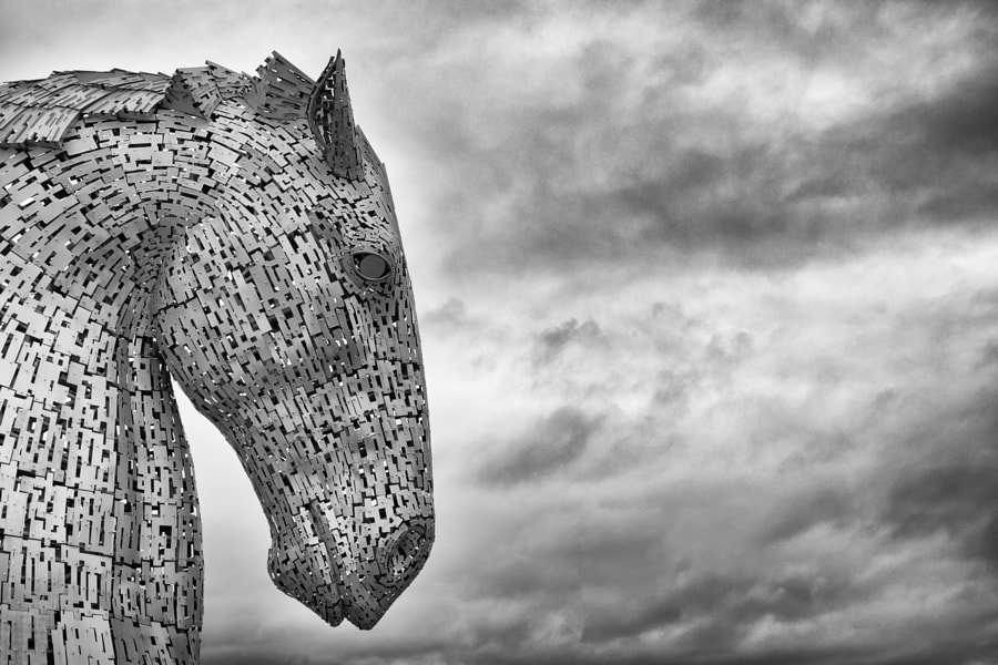 Kelpie down head and sky