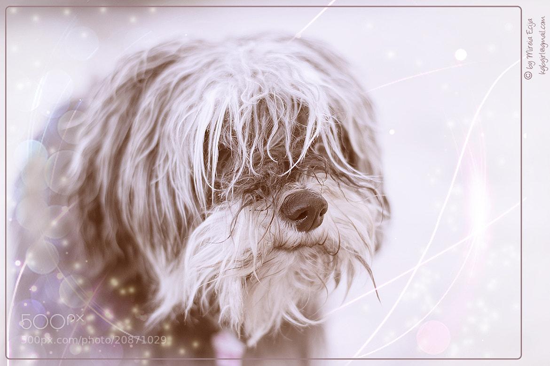Photograph My Princess by Mireia Ecija on 500px