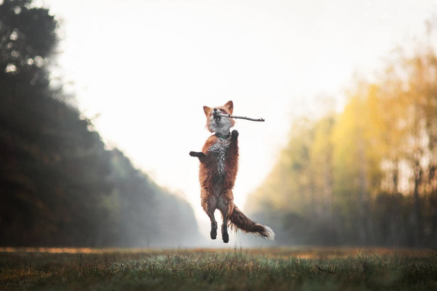 Morning fun, автор — Iza Łysoń на 500px.com