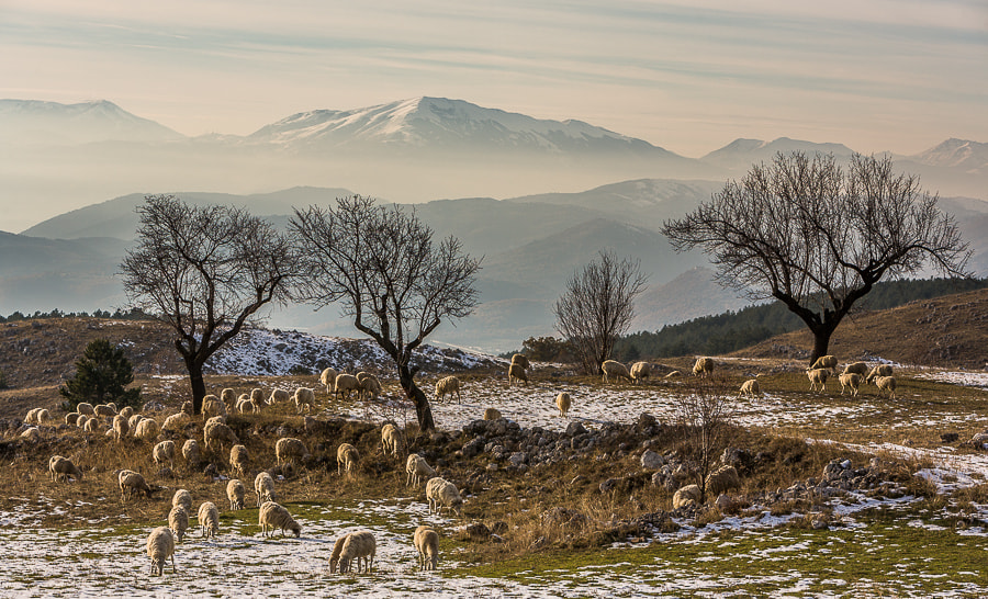 Photograph Autumn in Gran Sasso by Hans Kruse on 500px