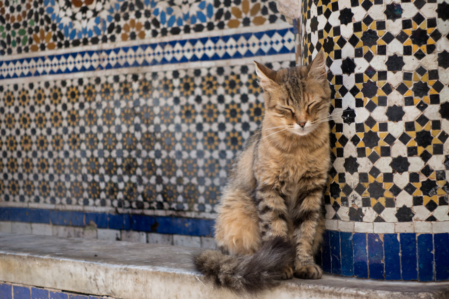 Cat relaxing in Fes by vielgefiel on 500px.com