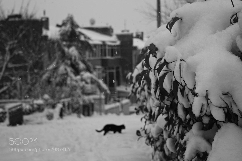 Photograph Frozen One Day by Sibel Sedefoğlu on 500px