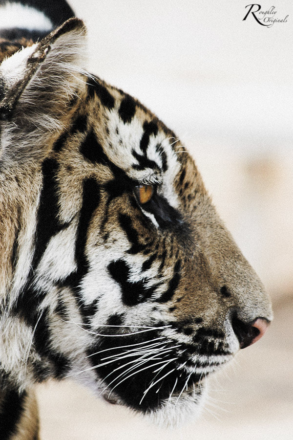 Photograph Cub by Roughley Originals on 500px