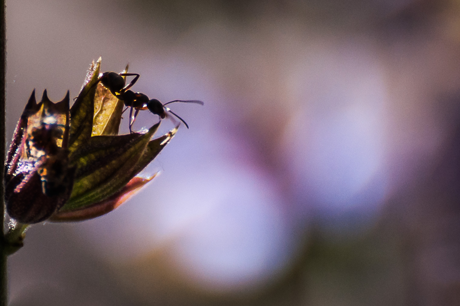 Photograph A bug's life by Carmen Royer on 500px