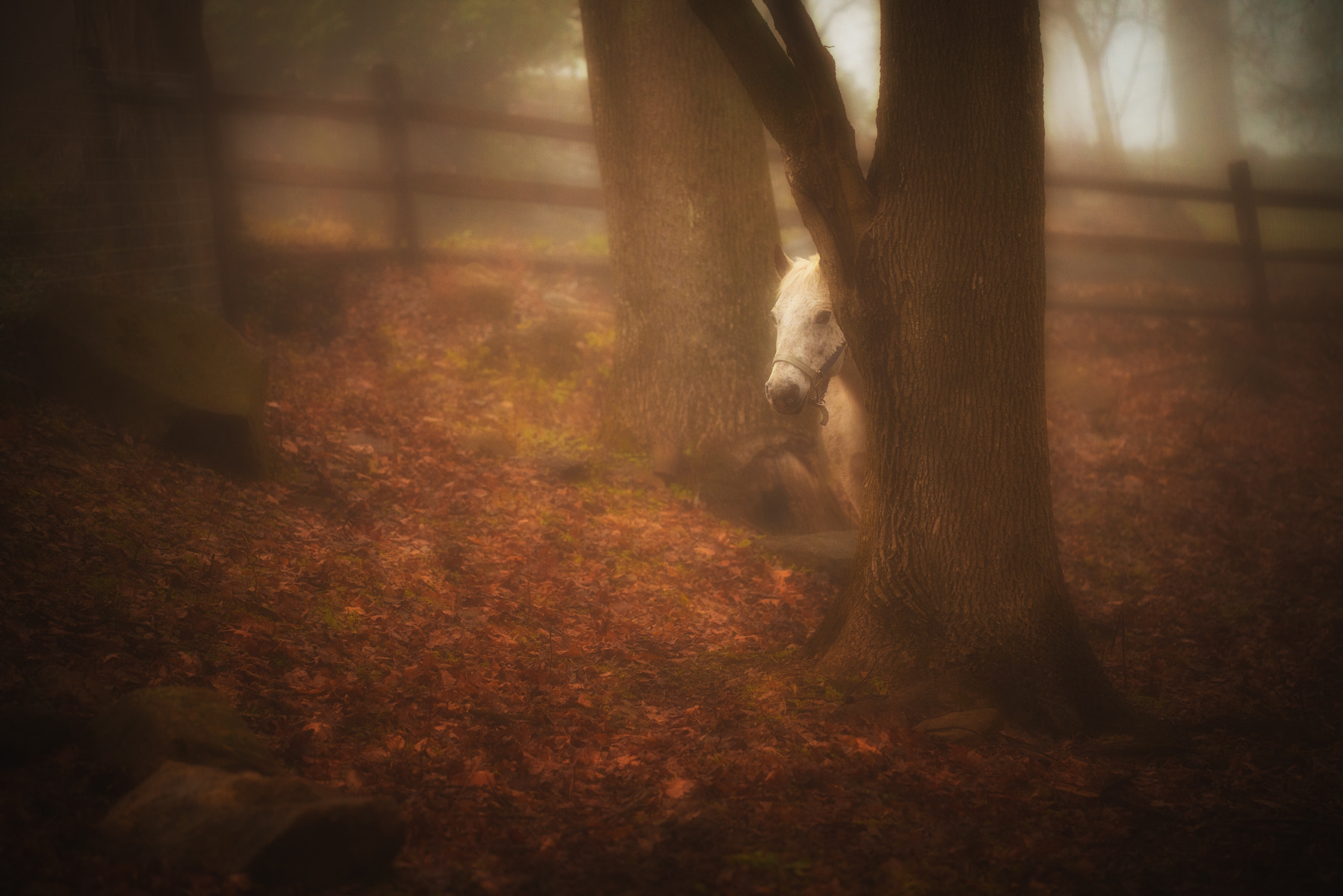 Photograph Once upon a time there was a very shy horse by Shavkat Hoshimov on 500px