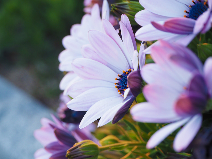 500px.comのKano SatoさんによるRoofthed bouquet