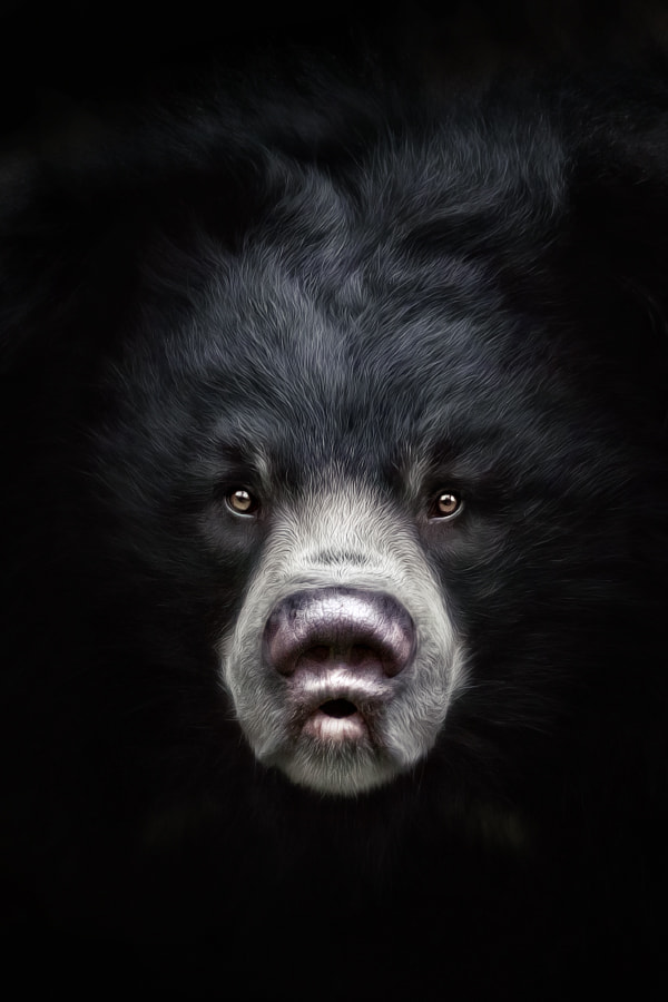 Photograph Sloth Bear Devi by Manuela Kulpa on 500px