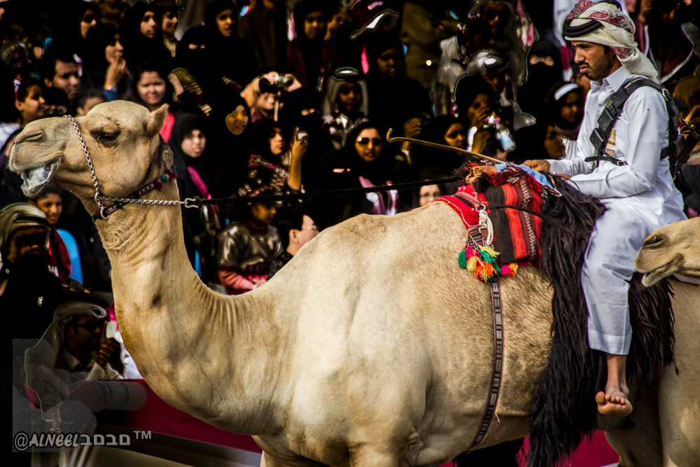 Photograph qatar national day 2012 events by Alneel םבםב™ on 500px