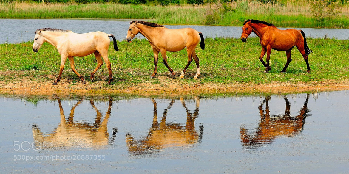 Photograph Tres cavalls by Joan Oliveras on 500px