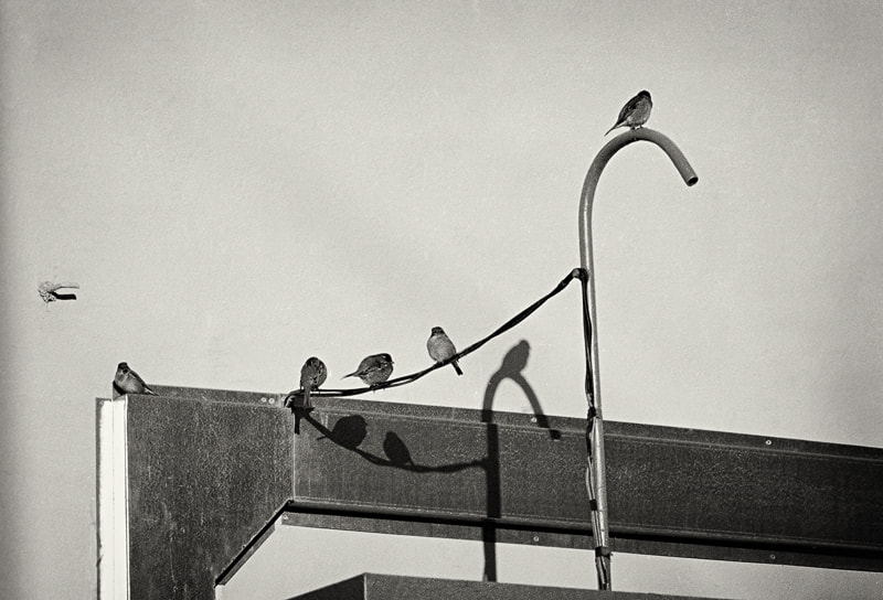 Photograph Birds by Andrey Lifar on 500px