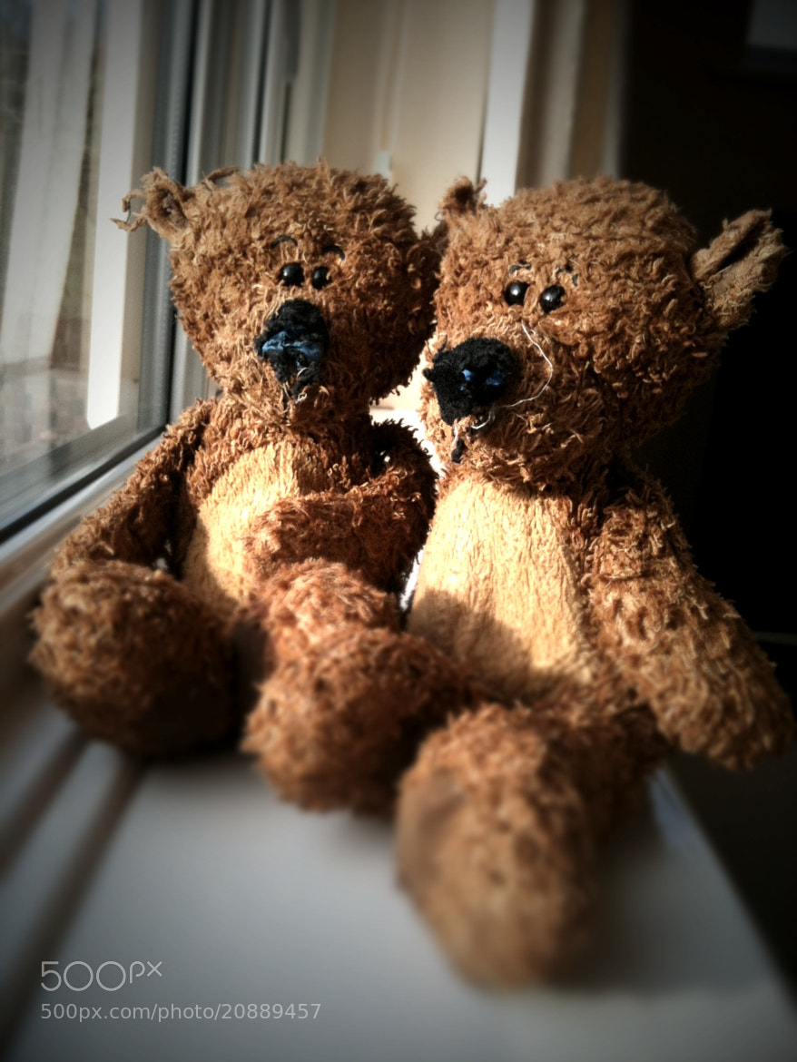 Photograph Well Loved Bears by Adam Cochrane on 500px
