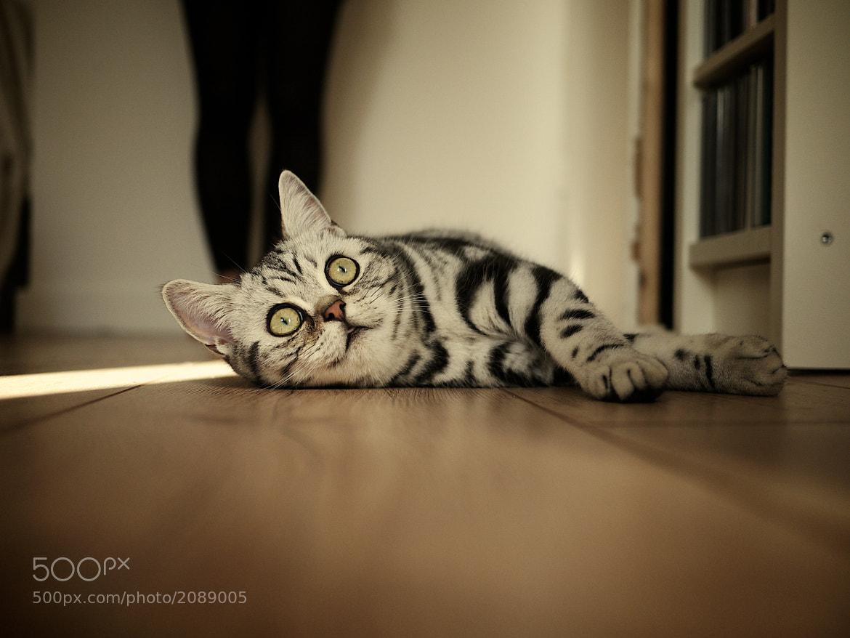 Photograph Cat by David Hellmann on 500px