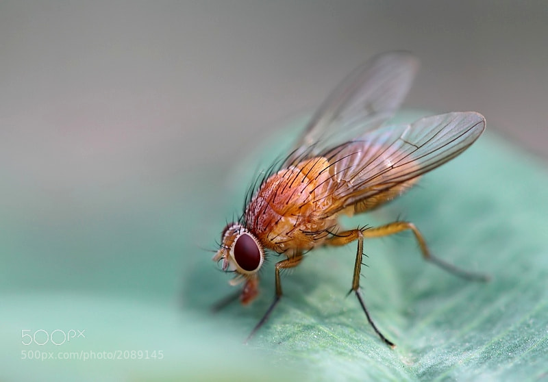 Photograph mouche orange by aurelie mascarelli on 500px