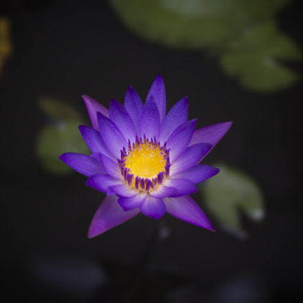 Waterlily, Nikon D610, AF Zoom-Nikkor 28-70mm f/3.5-4.5D