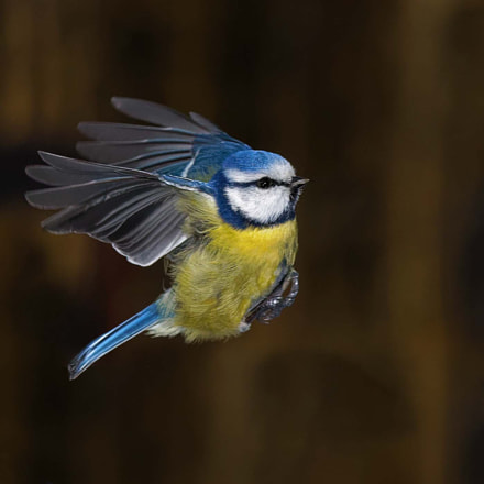 Caught in Flight, Canon EOS 5D MARK IV, Canon EF 70-200mm f/4L IS