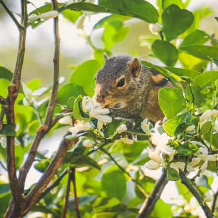 Squirrel eating flower, Canon EOS 80D, Canon EF-S 18-135mm f/3.5-5.6 IS USM