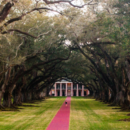 Oak Alley Plantation, Canon EOS 70D, Canon EF-S 18-55mm f/3.5-5.6 IS STM