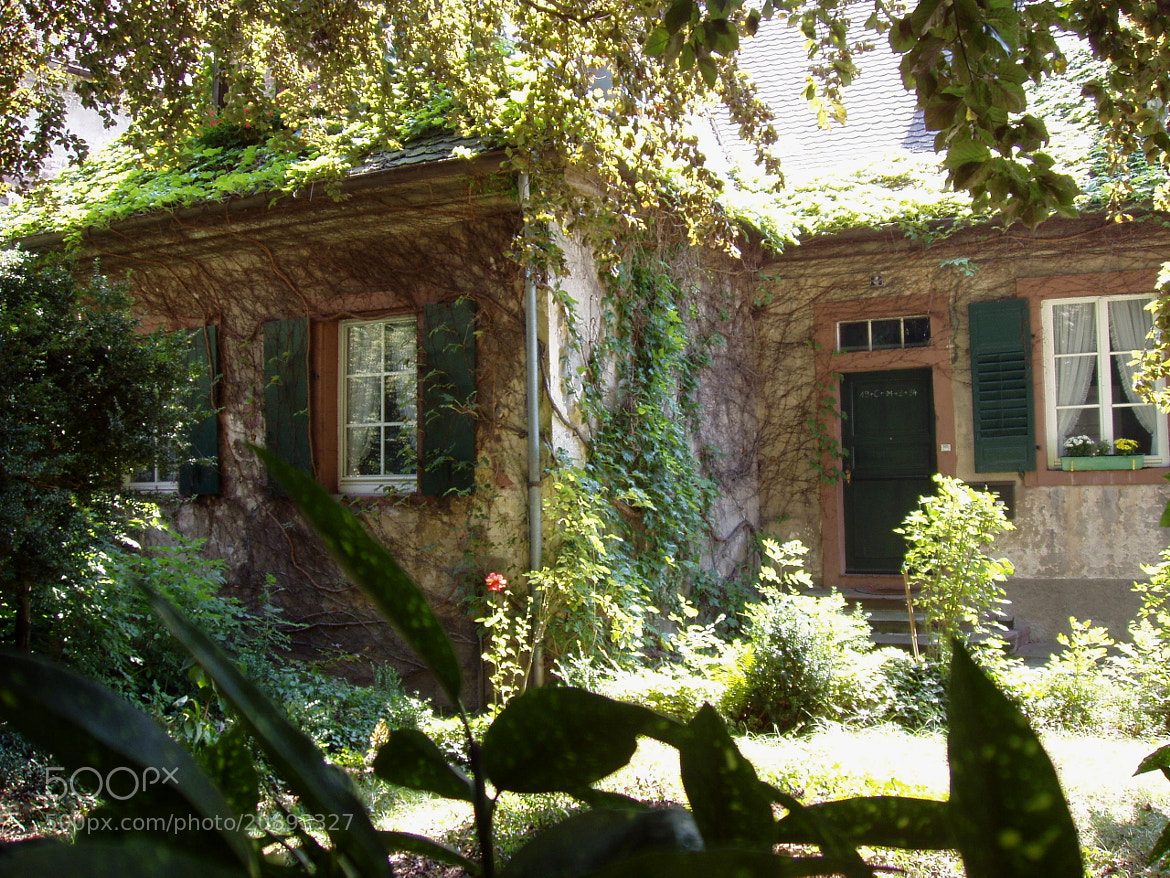 Photograph Old Ivy-Draped House in Baden-Baden by Michael Card on 500px