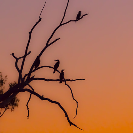 Sunset Comerants, Canon EOS 5DS R, Canon EF 100-400mm f/4.5-5.6L IS II USM