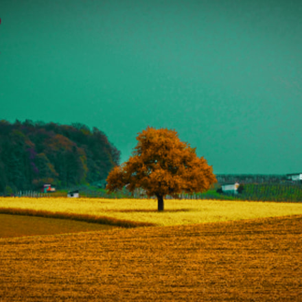 One tree hill, Canon POWERSHOT SX510 HS