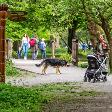 Morden Hall Park, Canon EOS 5D MARK III, Canon EF 300mm f/2.8L IS II USM