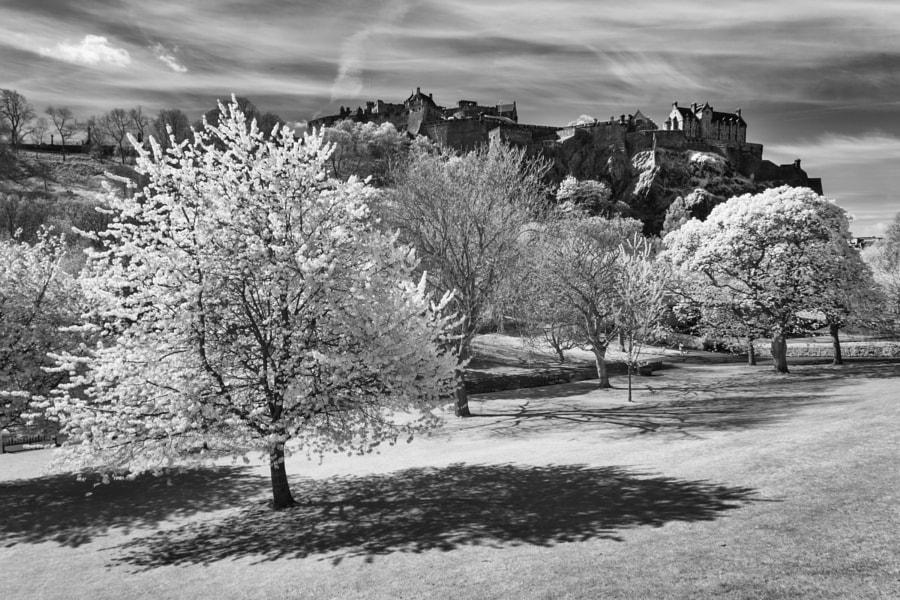 Edinburgh Castle from the gardens