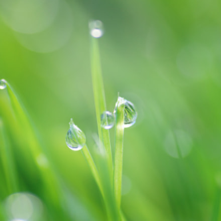 Morning Dew on Grass, Nikon D90, Tamron SP AF 90mm f/2.8 [Di] Macro 1:1 (172E/272E)