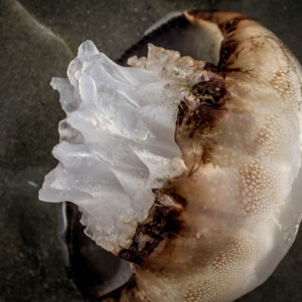 Fresh Jellyfish, Canon EOS REBEL T3, Canon EF-S 18-55mm f/3.5-5.6 IS II