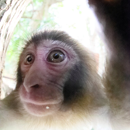 Fish Eye Baby Monkey, Canon EOS-1D X MARK II, Canon EF 8-15mm f/4L Fisheye USM