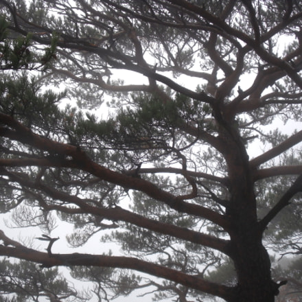 A Pine Tree On, Fujifilm FinePix J110W