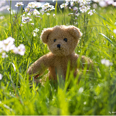 Teddy in the blooming, Canon EOS M5