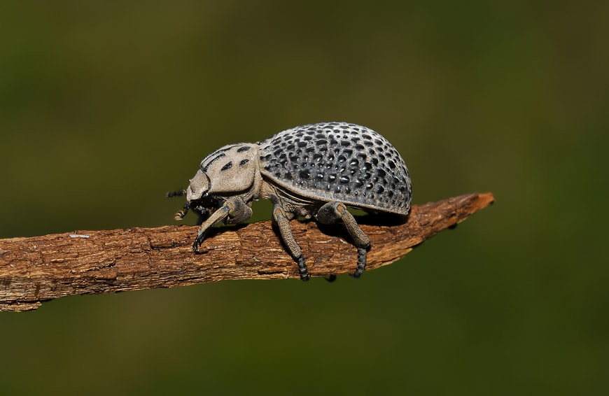 Photograph Bug. by Luis Jaime Leal on 500px