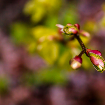 Spring is back , Canon EOS 750D, Canon EF 28-135mm f/3.5-5.6 IS