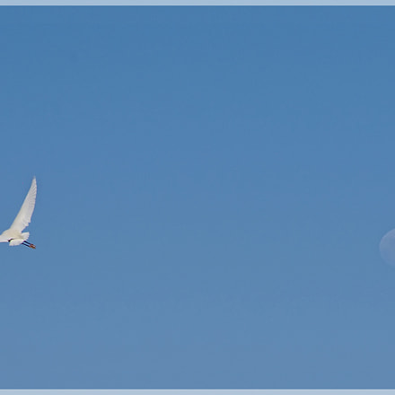 MOON  BIRD, Pentax K-5, smc PENTAX-DA* 50-135mm F2.8 ED [IF] SDM