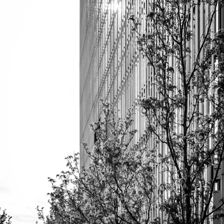 city building B&W, Canon EOS 5D MARK III, Tamron SP 45mm f/1.8 Di VC USD