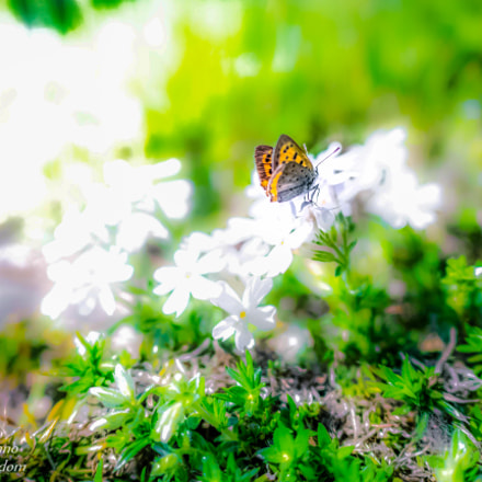 Butterfly in soft light, Panasonic DMC-GM1S, LEICA DG SUMMILUX 15/F1.7