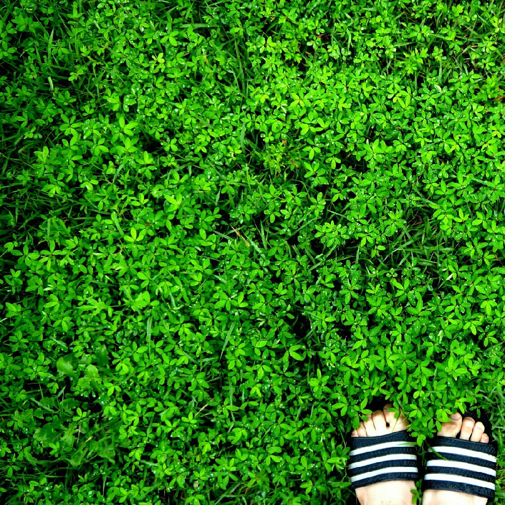 Photograph GREEN by 정로 김 on 500px