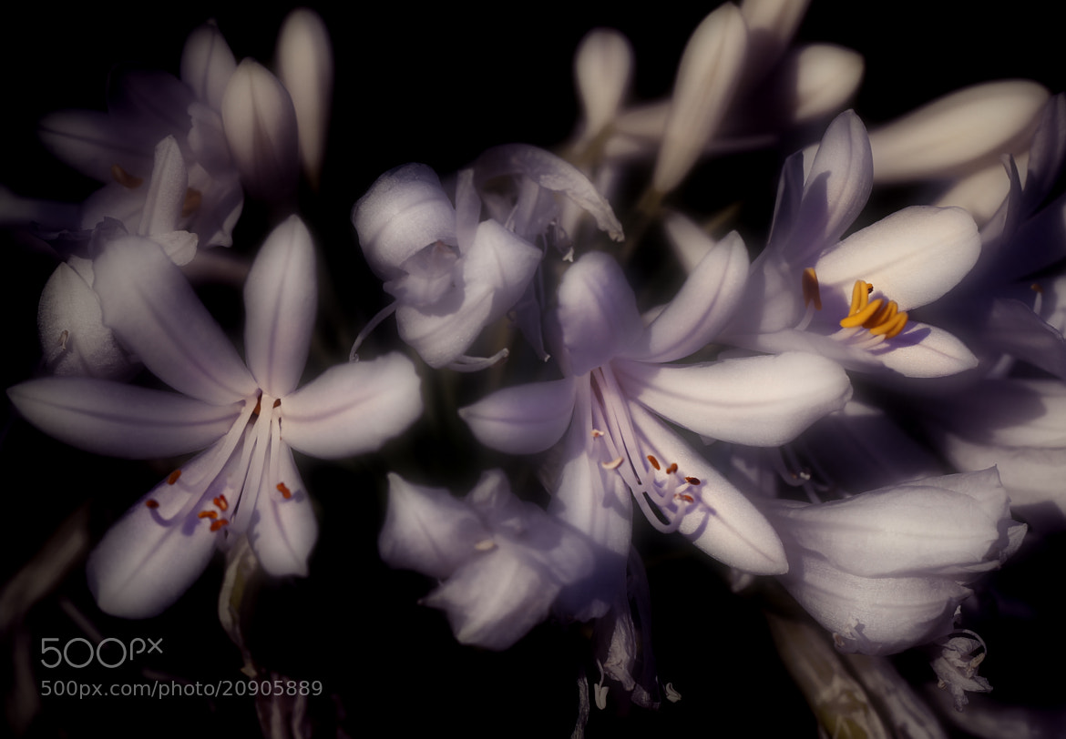 Photograph In the Light by Pieter Oosthuysen on 500px