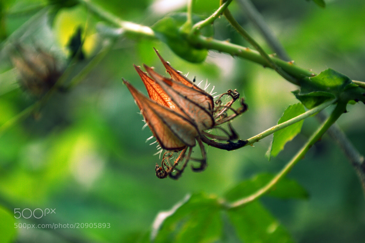 Photograph Crown by sajan Laks on 500px