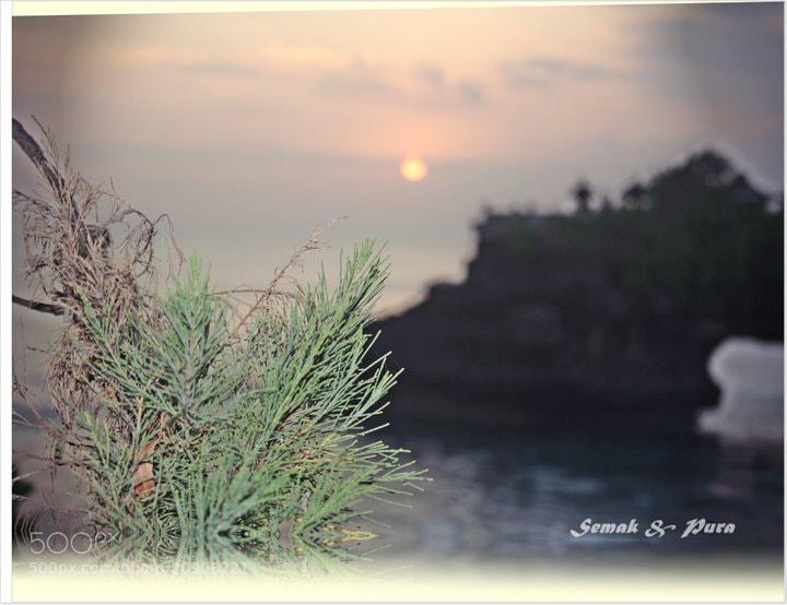 Photograph Sesemak  by daeng syamsoe on 500px