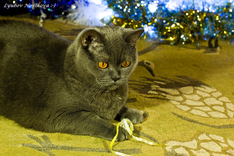Photograph in anticipation of the holiday. by Lyubov Novikova on 500px